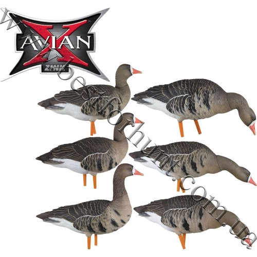 Avian-X® Painted AXP Specklebelly Full Body Geese Decoy Fusion 6 Pack 9014