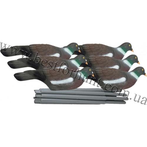 Pigeon Shell Decoy Set 6 pcs